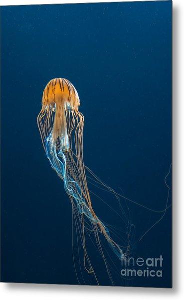Jellyfish Metal Print by Ileysen
