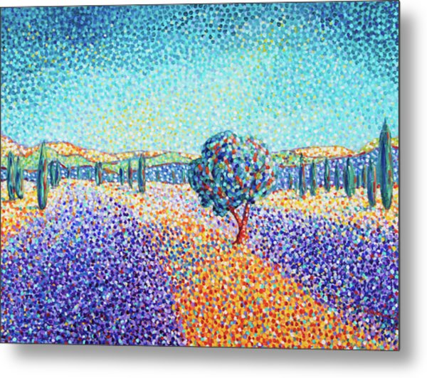 Lavender Field In Provence Metal Print