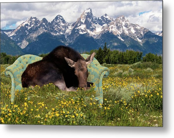 Nap Time In The Tetons Metal Print