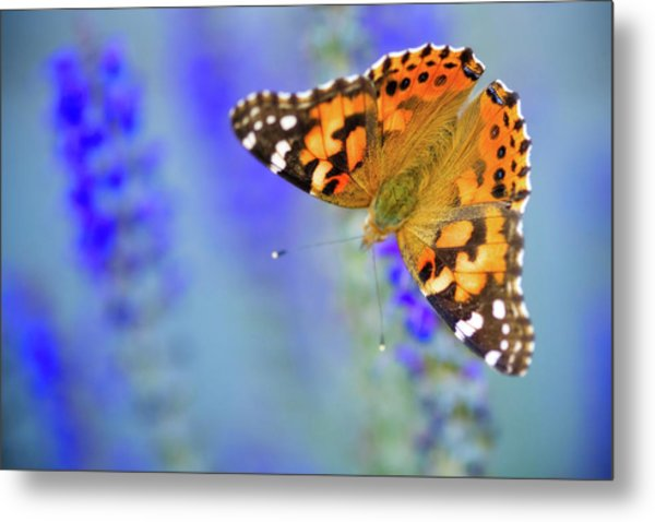 Metal Print featuring the photograph Painted Lady Butterfly by Nicole Young