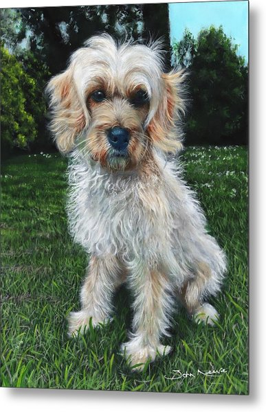Portrait Of Toffee Metal Print