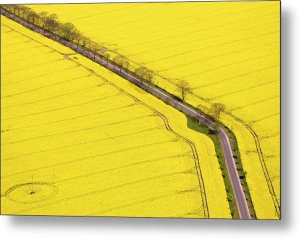 Rape Field Photographed From The Air Metal Print by Willi Rolfes
