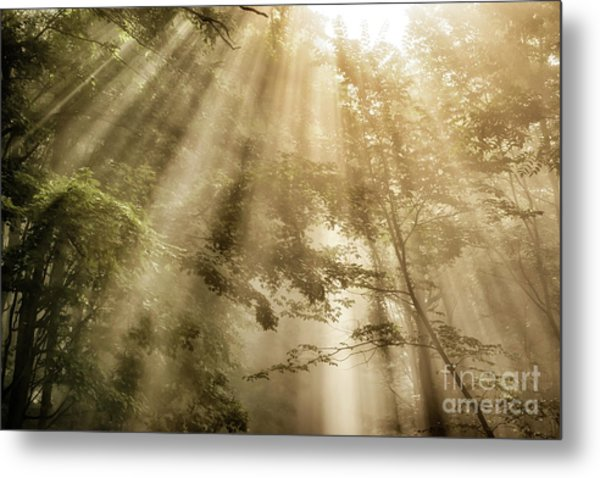 Rays Of Light In Forest Metal Print