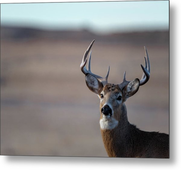 Metal Print featuring the photograph Rocky Mountain Deer by Philip Rodgers