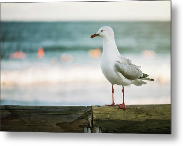 Metal Print featuring the photograph Seagull On The Beach. by Rob D