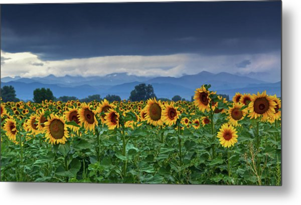 Metal Print featuring the photograph Sunflowers Under A Stormy Sky by John De Bord