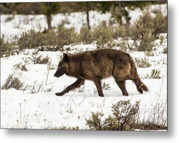 Metal Print featuring the photograph W10 by Joshua Able's Wildlife