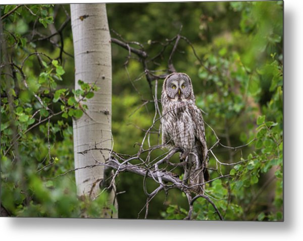 Metal Print featuring the photograph B14 by Joshua Able's Wildlife