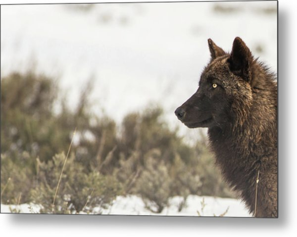Metal Print featuring the photograph W15 by Joshua Able's Wildlife