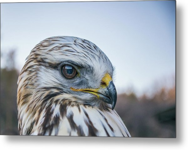 Metal Print featuring the photograph B2 by Joshua Able's Wildlife