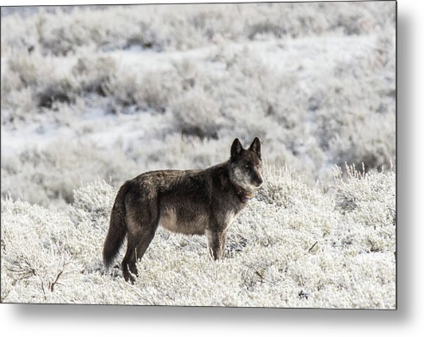 Metal Print featuring the photograph W23 by Joshua Able's Wildlife