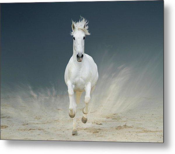 White Horse Galloping Metal Print by Christiana Stawski