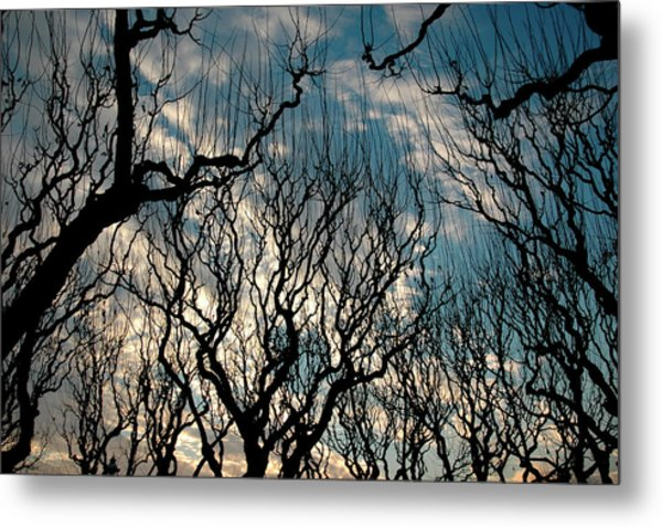 Metal Print featuring the photograph Winter Bare by Rein Nomm