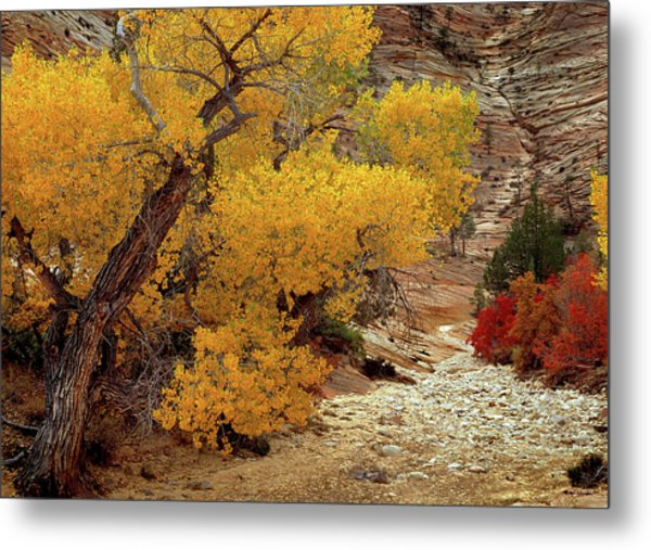 Zion National Park Autumn Metal Print