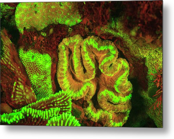 Natural Occurring Fluorescence Metal Print by Stuart Westmorland