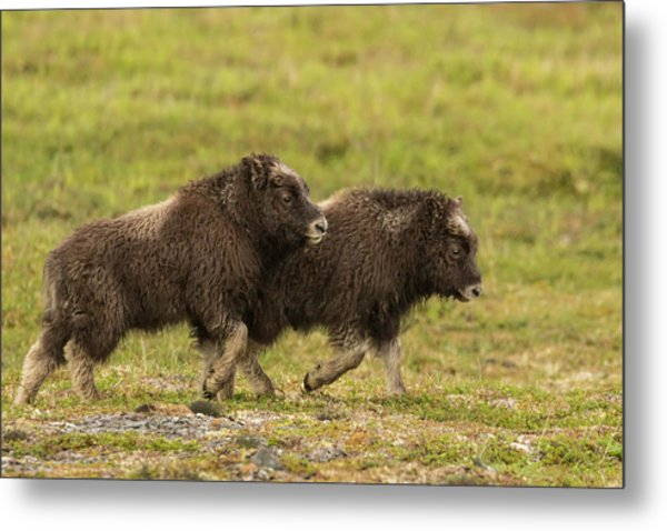 Usa, Alaska, Nome Metal Print by Jaynes Gallery