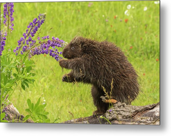 Usa, Minnesota, Minnesota Wildlife Metal Print by Jaynes Gallery