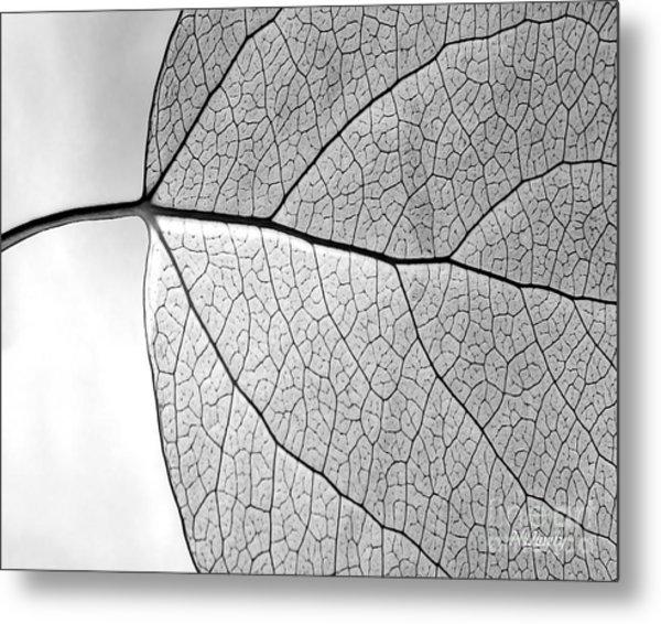 Aspen Leaf Veins Metal Print