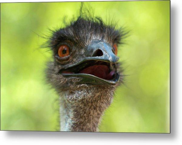 Australian Emu Outdoors Metal Print