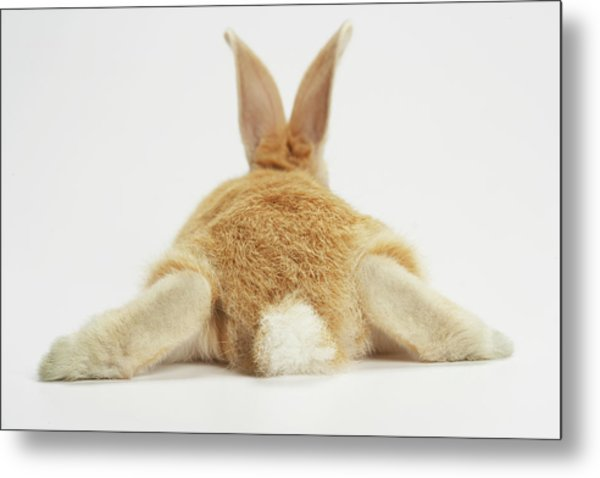 Beige Bunny Rabbit On White Background Metal Print by American Images Inc