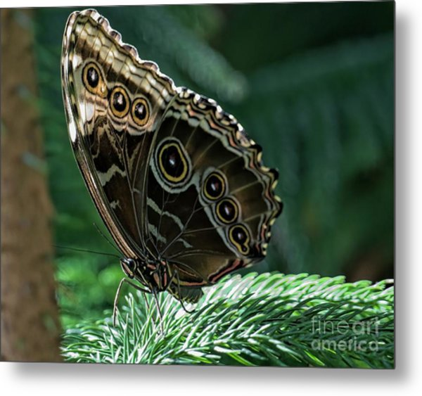 Butterfly Metal Print by Elijah Knight