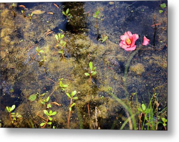 Cypress Swamp In Spring. South Metal Print