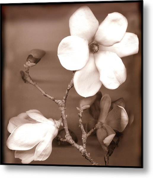 Flower Metal Print by David Provost