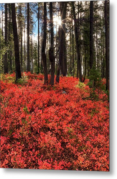 Forest Of Red Metal Print