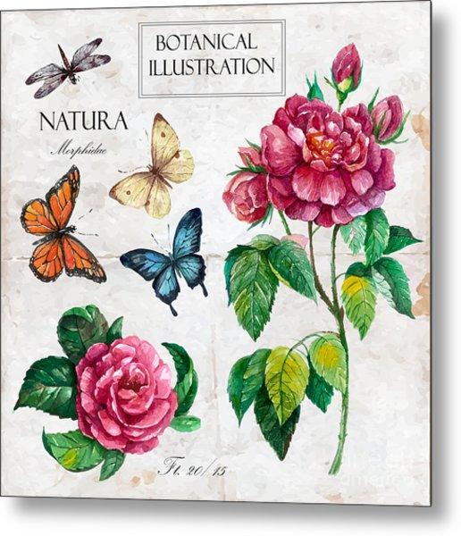 Hand Drawn Botanical Illustration In Metal Print