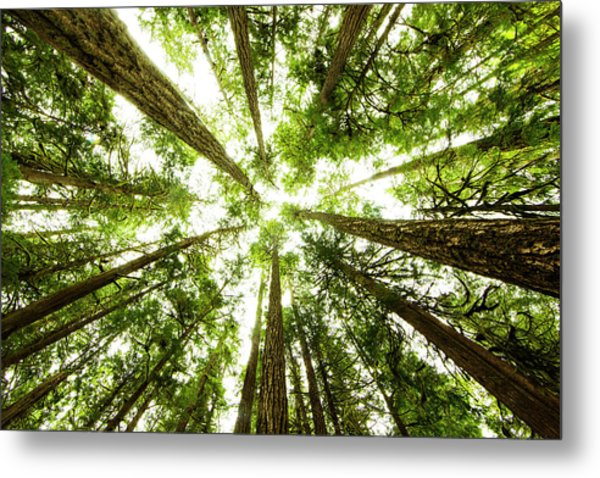 Lush Green Rain Forest Metal Print by Jordan Siemens