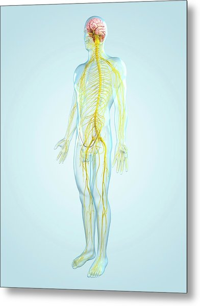 Nervous System, Artwork Metal Print by Sciepro