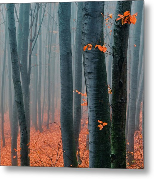 Orange Wood Metal Print