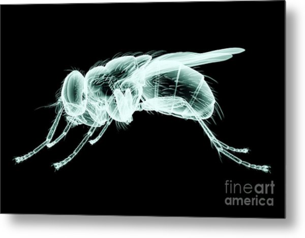 Xray Image Of An Insect Isolated On Metal Print
