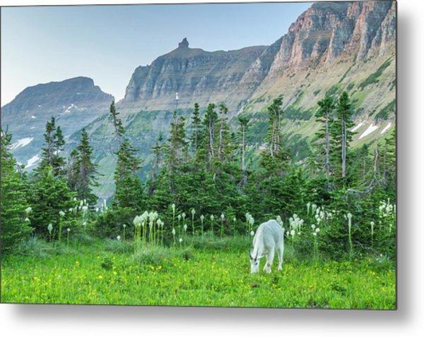 Usa, Montana, Glacier National Park Metal Print by Jaynes Gallery