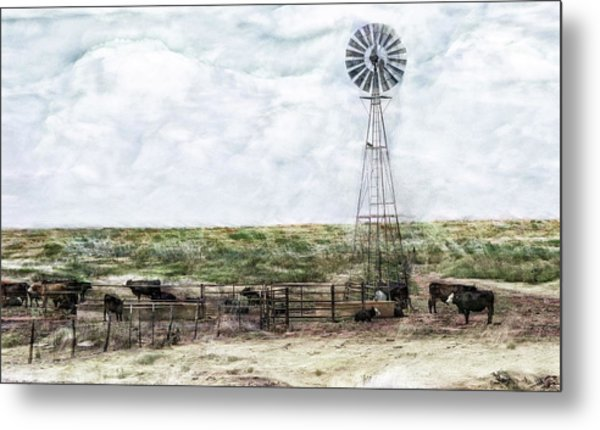 Classic Cattle II Metal Print