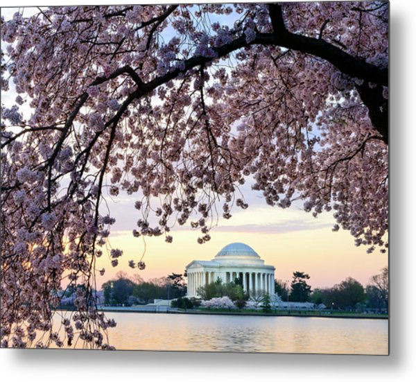 Jefferson Memorial Framed By Cherry Metal Print by Ogphoto