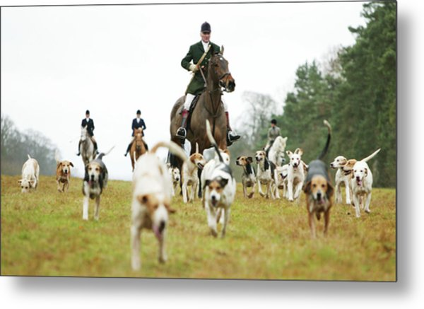 The Beaufort Hunt, Gloucestershire Metal Print by Brent Stirton