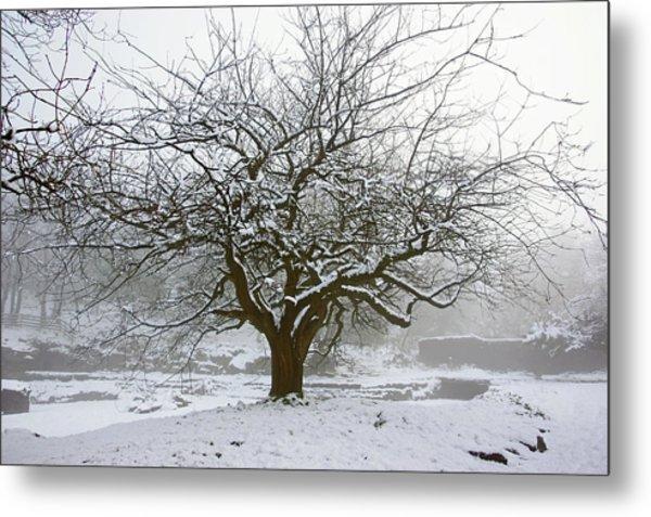 30/01/19  Rivington.  Japanese Pool. Snow Clad Tree. Metal Print