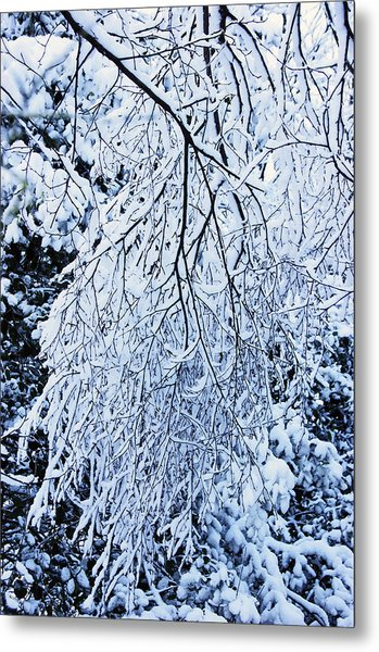 30/01/19  Rivington. Snow Covered Branches. Metal Print