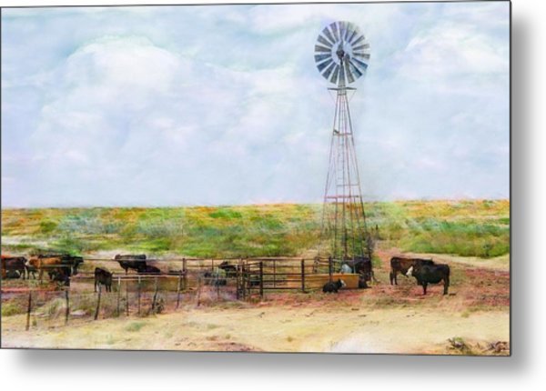 Classic Cattle  Metal Print