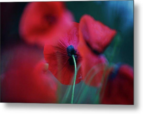 Red Corn Poppy Flowers Metal Print