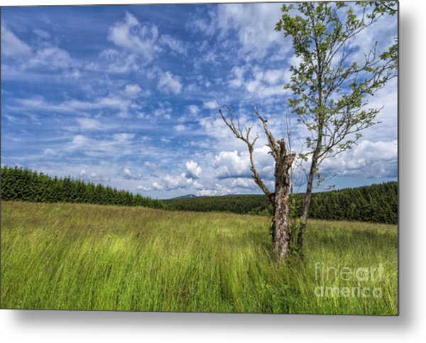The Harz National Park Metal Print