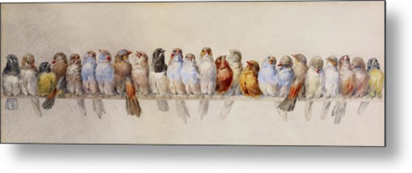 A Perch Of Birds  Metal Print