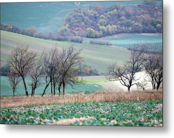 Metal Print featuring the photograph Autumn In Moravia 8 by Dubi Roman