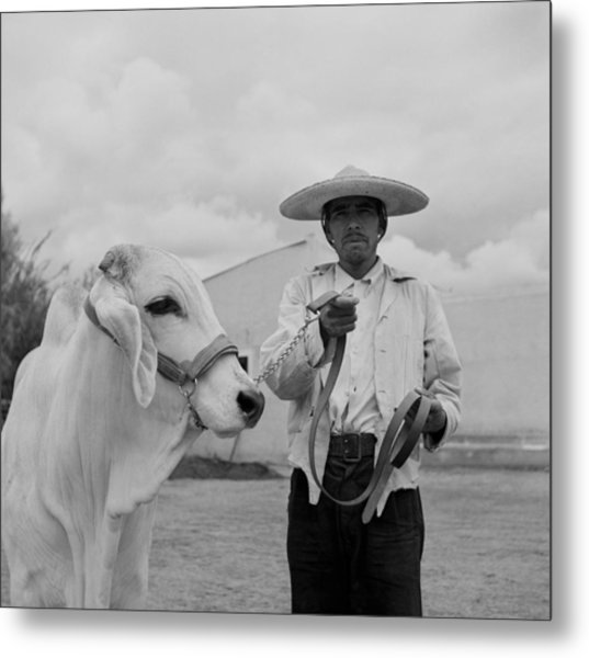 Ranching In Michoacan, Mexico Metal Print by Michael Ochs Archives