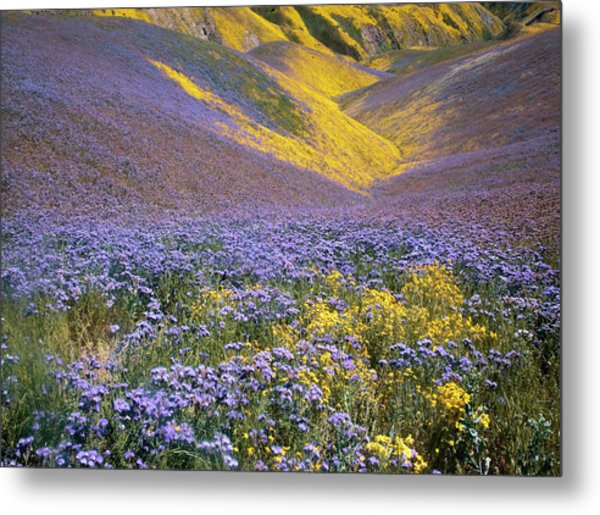 Usa, California, Carrizo Plain National Metal Print by Charles Gurche