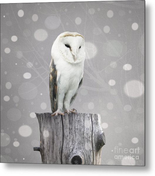 A Beautiful Barn Owl Above A Trunk With Metal Print