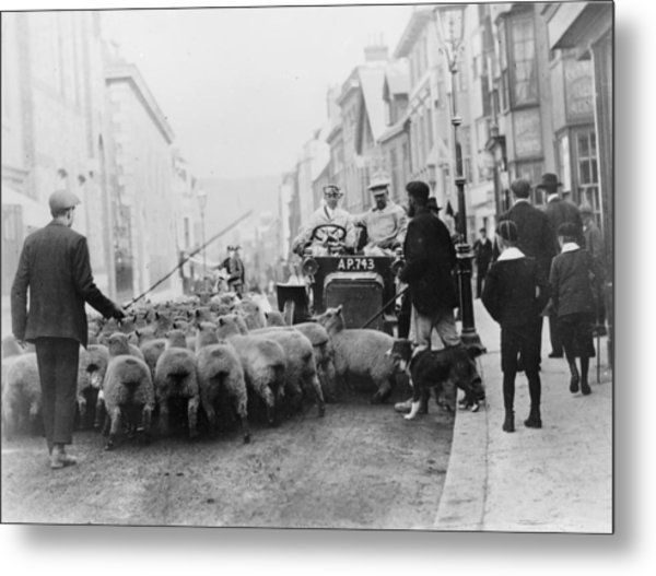 A Car Surrounded By Sheep, Lewes High Metal Print