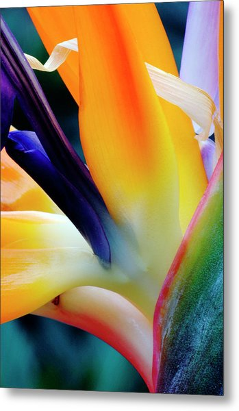 A Close-up Of A Flower Of A Bird Of Metal Print by Eromaze