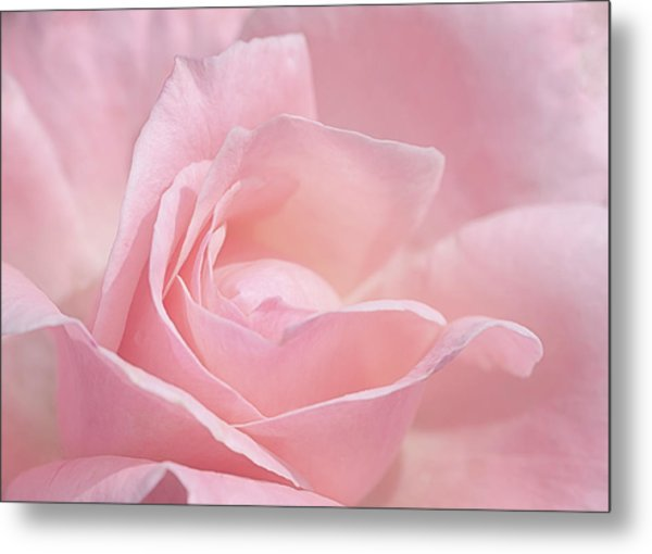 Metal Print featuring the photograph A Delicate Pink Rose by Susan Rissi Tregoning